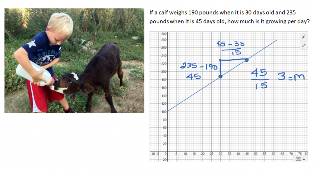 Calf Growth Rate