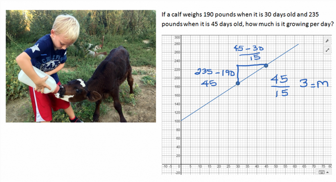 Graphing growth of a calf